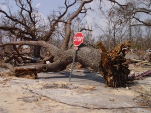 picture of downed tree for hexayurttape.com
